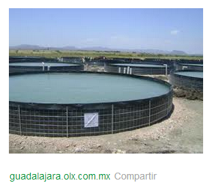Pisciculturaglobal for Proyecto de tilapia en estanques
