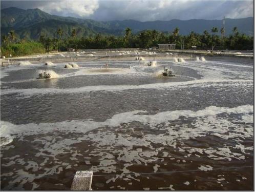 Pisciculturaglobal for Construccion de estanques circulares para tilapia